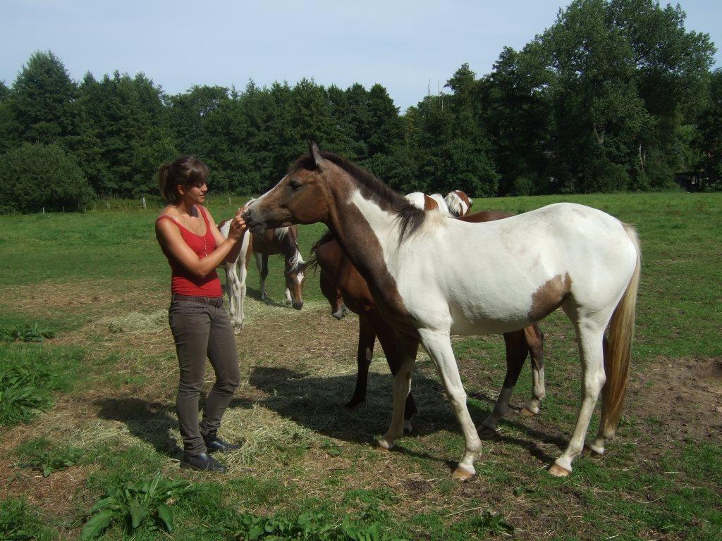 Ein Curly Horse kaufen in Celle