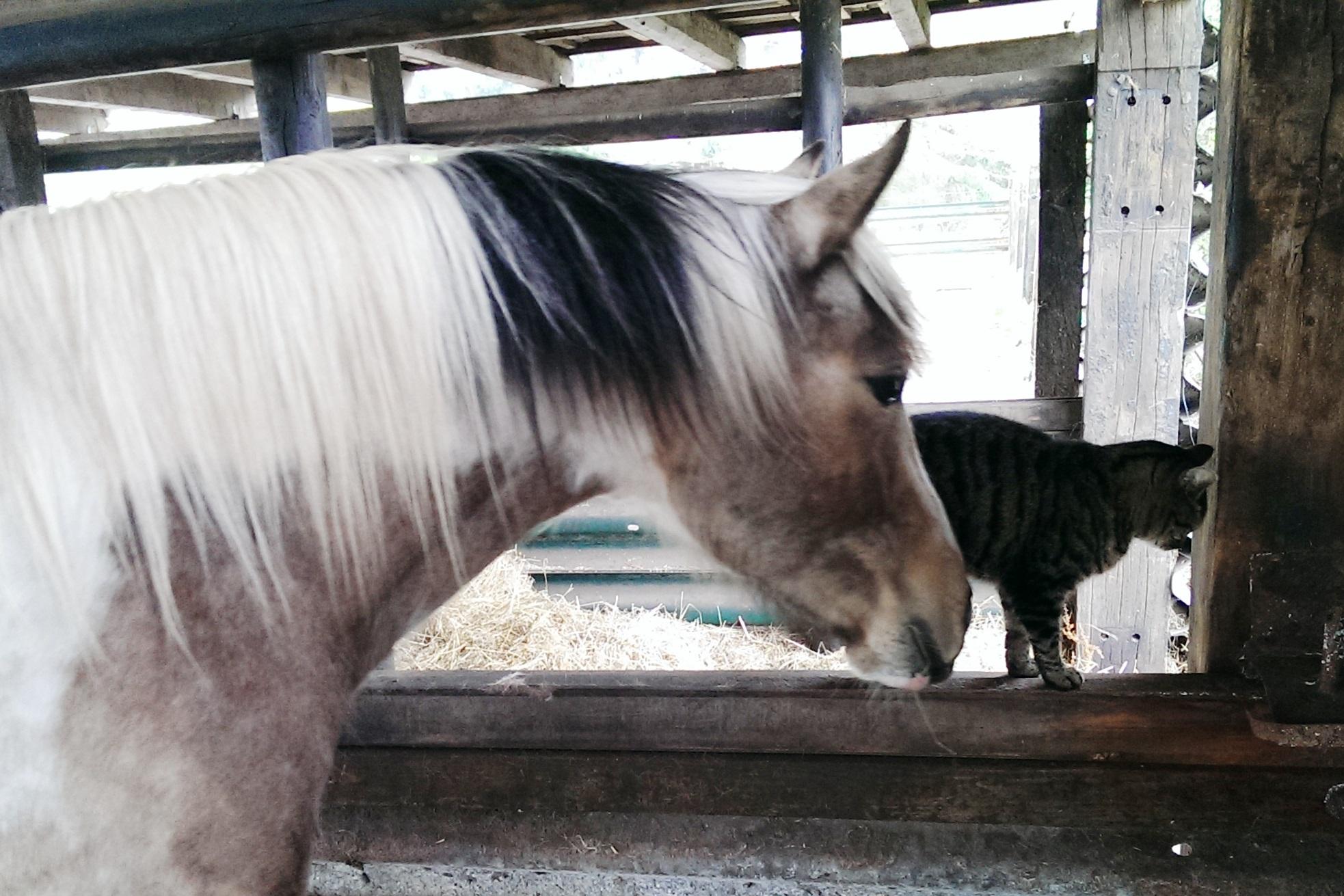Pferdespielzeig und Neugierde