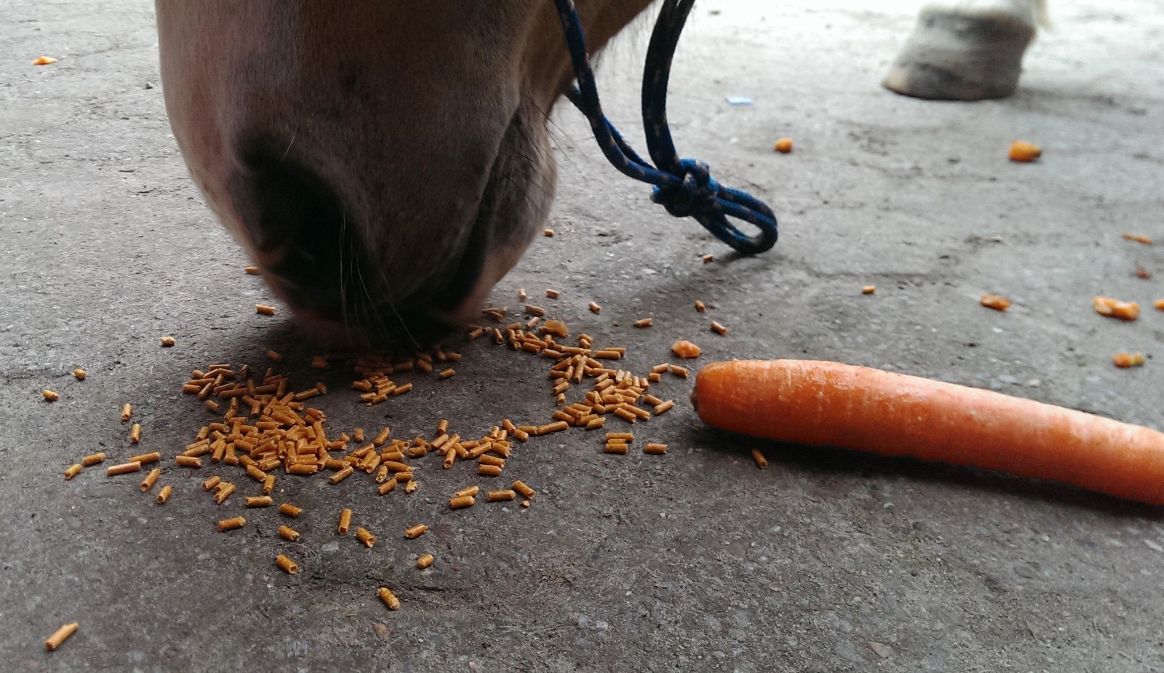 Karottenchips und Möhren