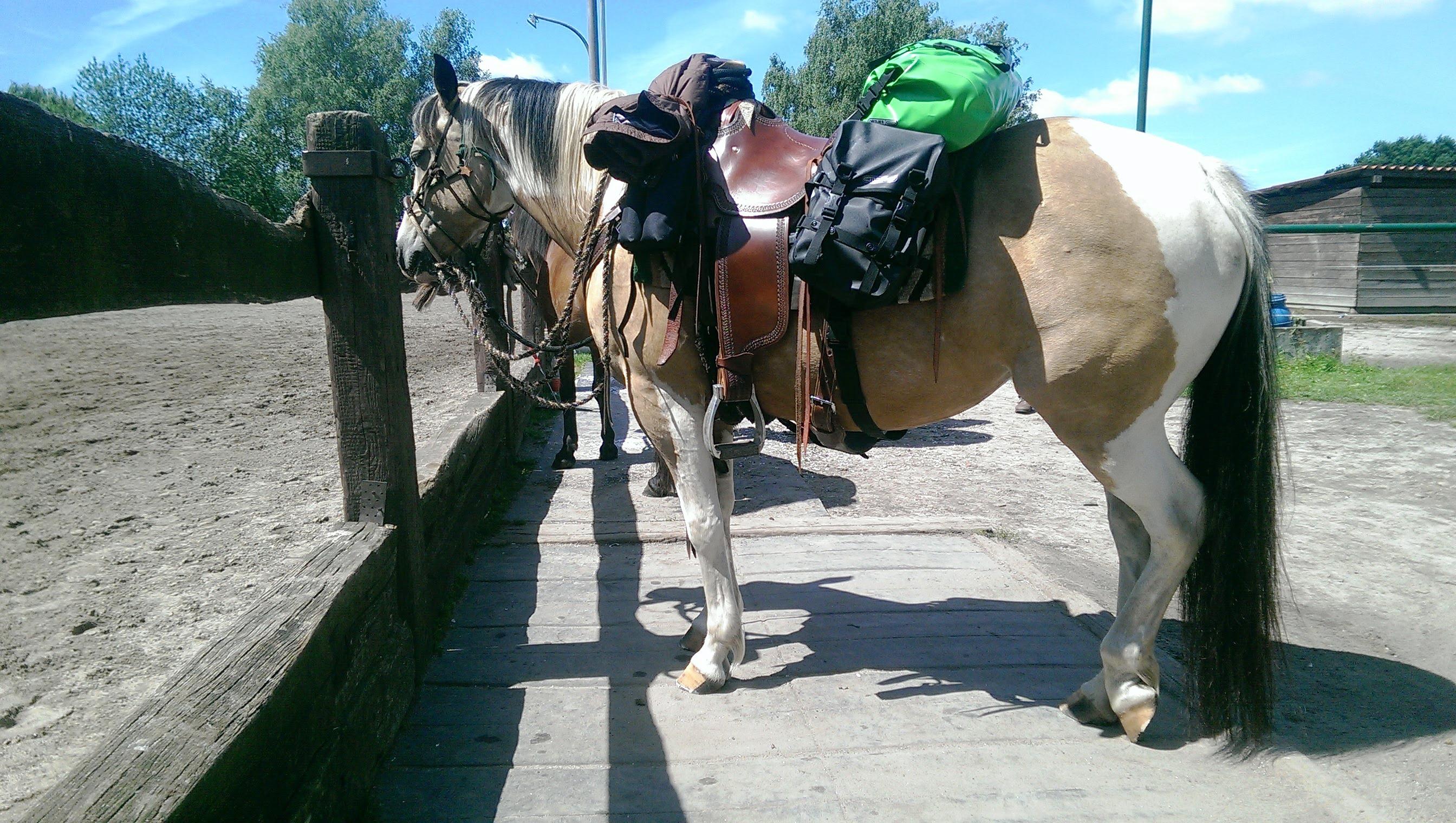 Wanderrittvorbereitung Packtaschen mit Bananentaschen von Ortlieb