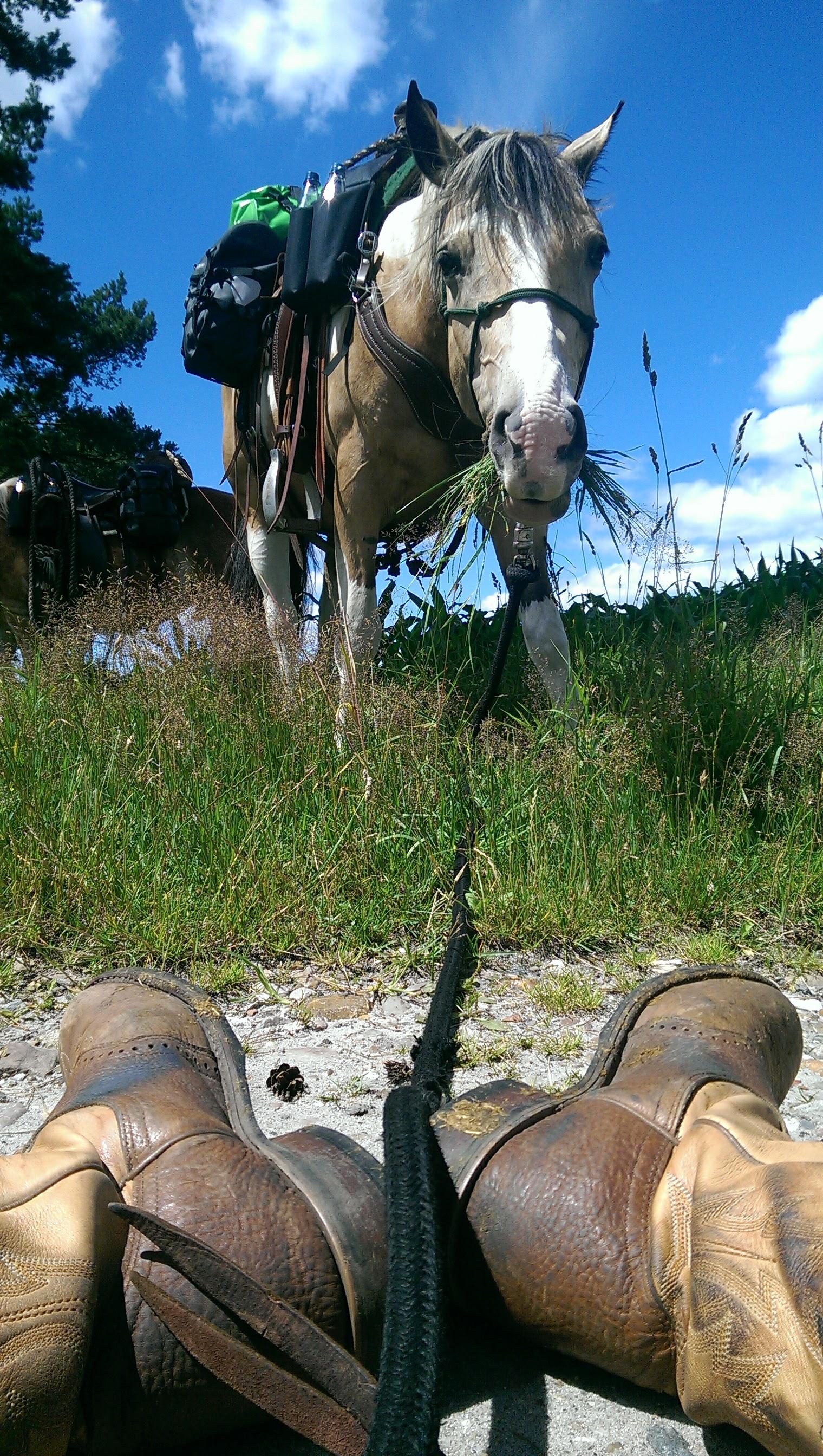 Pause Westernstyle mit meiner Curly Horse Stute